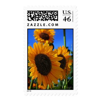 Summer Sunflowers stamp
