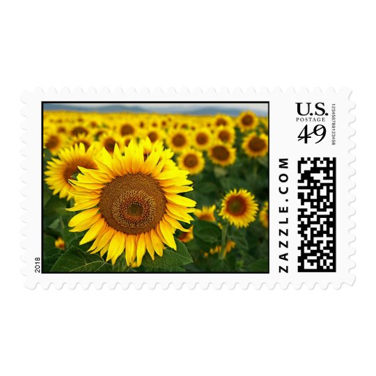 Summer Sunflowers Postage