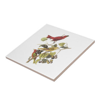 Summer Tanager by Audubon Tile