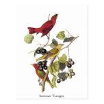 Summer Tanager by John Audubon Postcard