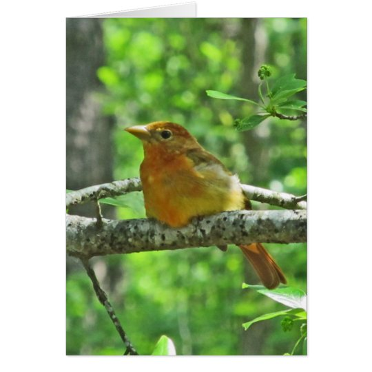 Summer Tanager (female) Card