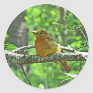 Summer Tanager (female) Classic Round Sticker
