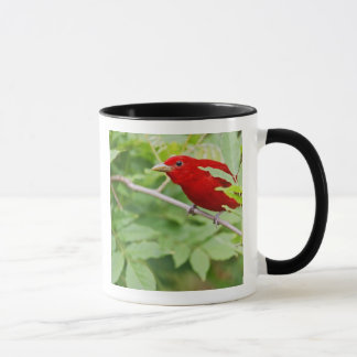 Summer Tanager Piranga rubra) male, spring, Mug