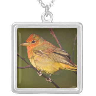 Summer Tanager Piranga rubra) young male Silver Plated Necklace