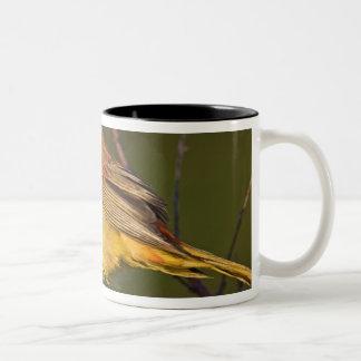 Summer Tanager Piranga rubra) young male Two-Tone Coffee Mug