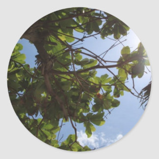 Summer Trees Classic Round Sticker