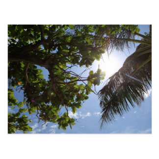 Summer Trees Postcard