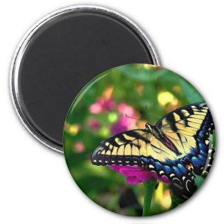 Summer Visitor Magnets
