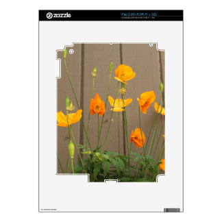 Summer wild yellow poppy flowers, wooden fence skin for the iPad 2