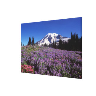 summer wildflowers at the base of Mount Rainier, Canvas Print