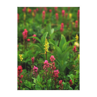 Summer Wildflowers Send Forth A Riot Of Color Canvas Prints