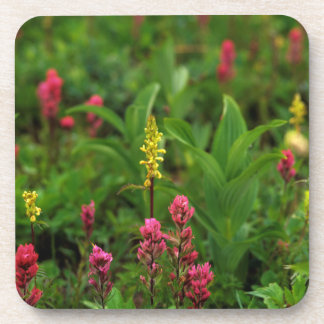 Summer Wildflowers Send Forth A Riot Of Color Beverage Coasters