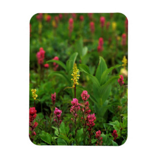 Summer Wildflowers Send Forth A Riot Of Color Magnet