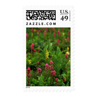 Summer Wildflowers Send Forth A Riot Of Color Postage Stamps