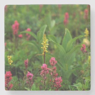 Summer Wildflowers Send Forth A Riot Of Color Stone Coaster