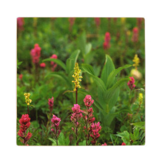 Summer Wildflowers Send Forth A Riot Of Color Wooden Coaster
