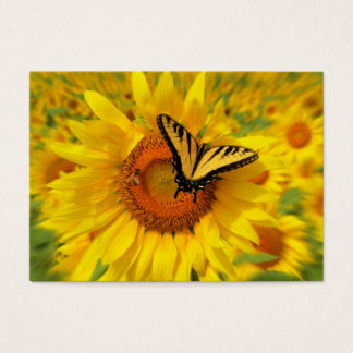 Summer wings , Business card