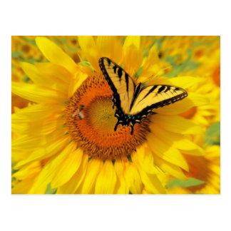 Summer wings , postcards