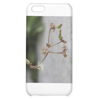 Summer Wish Weed Cover For iPhone 5C