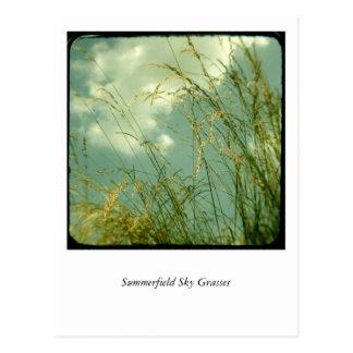 Summerfield Sky Grasses Postcard