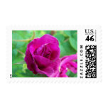 SummerFlowers030 Postage Stamp