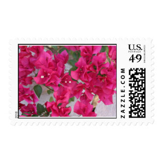 Summers Bougainvillea Blossoms Postage