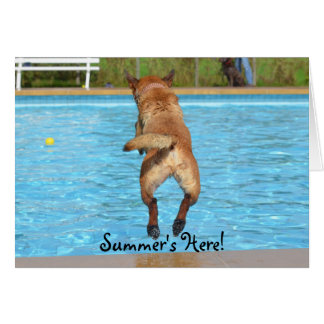Summer's Here Dog