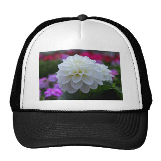 Summer's Sigh Trucker Hat