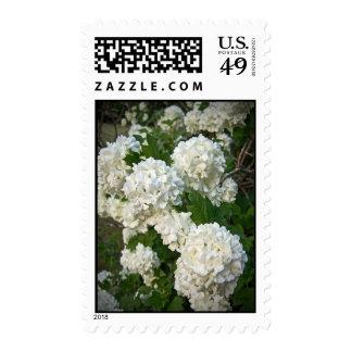Summer's Snowballs Postage Stamps