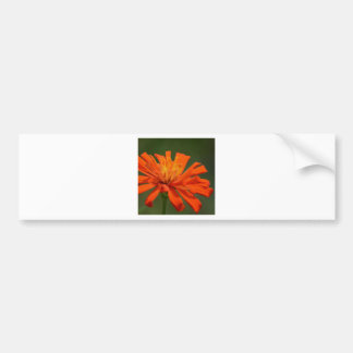 Summer's Vibrancy Bumper Sticker