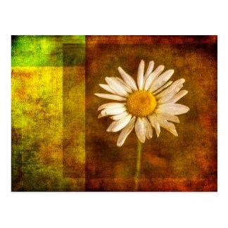 Summertime Daisy Postcard