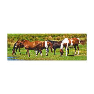 Summertime Horses Canvas Print