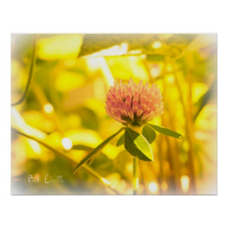 Summertime In A Field Of Clover 1 Poster