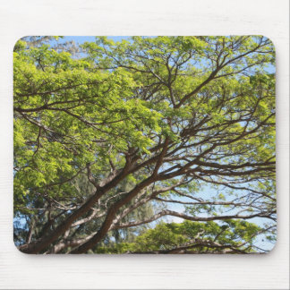 Summertime Tree Photography Mouse Pads