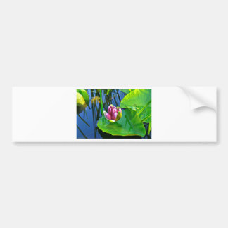 Summery ode ton the Water Lily Bumper Sticker