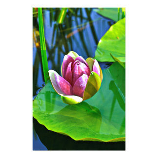 Summery ode ton the Water Lily Stationery