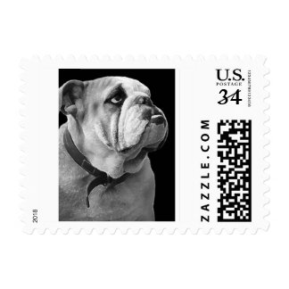 Sumo el sello inglés del dogo (retrato)