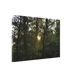 Sun a través de árboles en la caza de Cannock Impresión En Lona