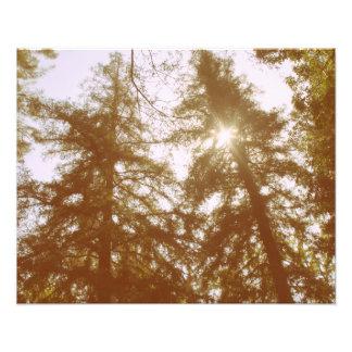 Sun a través de árboles fotografía