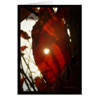 Sun a través de la hoja roja tarjeta de felicitación