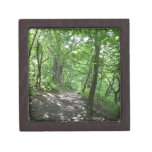 Sun a través de los árboles cajas de recuerdo de calidad
