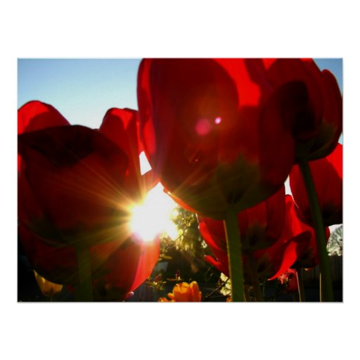 Sun and Red Petals Poster