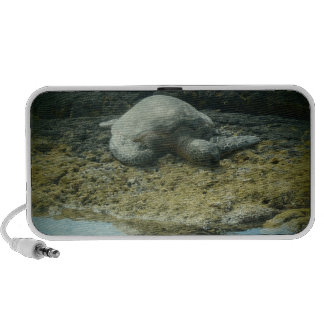 Sun bathing sea turtle speaker