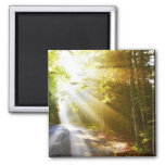 Sun Beams Through Forest in Acadia National Park 2 Inch Square Magnet