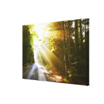 Sun Beams Through Forest in Acadia National Park Canvas Prints