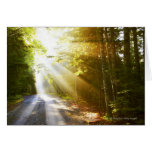 Sun Beams Through Forest in Acadia National Park Cards