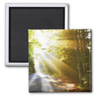 Sun Beams Through Forest in Acadia National Park Magnets