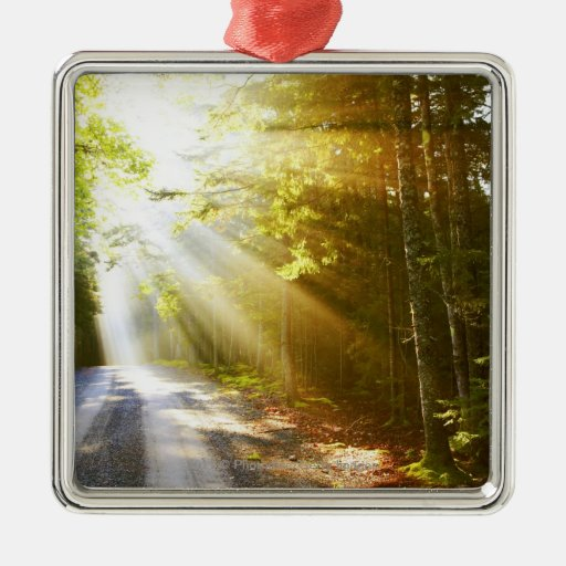Sun Beams Through Forest in Acadia National Park Christmas Ornaments
