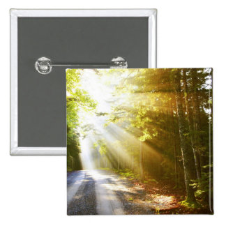 Sun Beams Through Forest in Acadia National Park Pinback Button