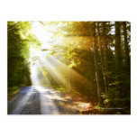 Sun Beams Through Forest in Acadia National Park Post Cards